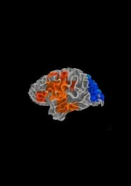 Brain with background